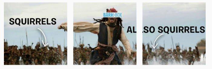BarkBox Instagram Meme for Marketing