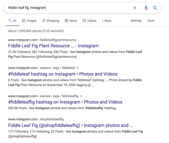 Instagram SEO Google results for fiddle leaf fig instagram