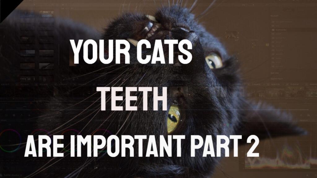 cats teeth black cat