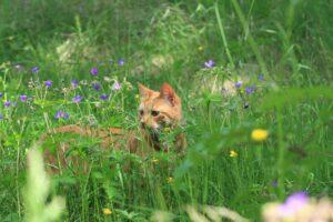 ginger cat in garden