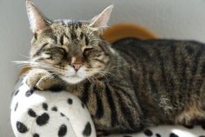 cat bedding