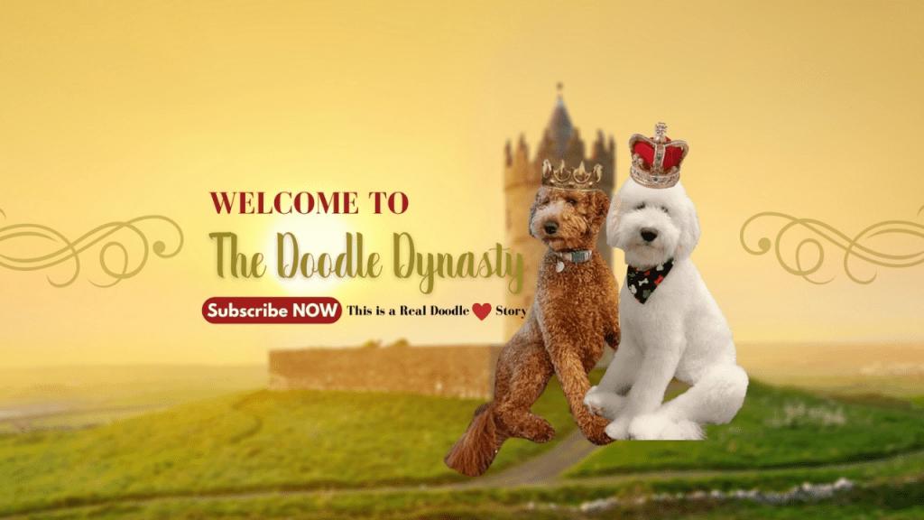 goldendoodles breeder