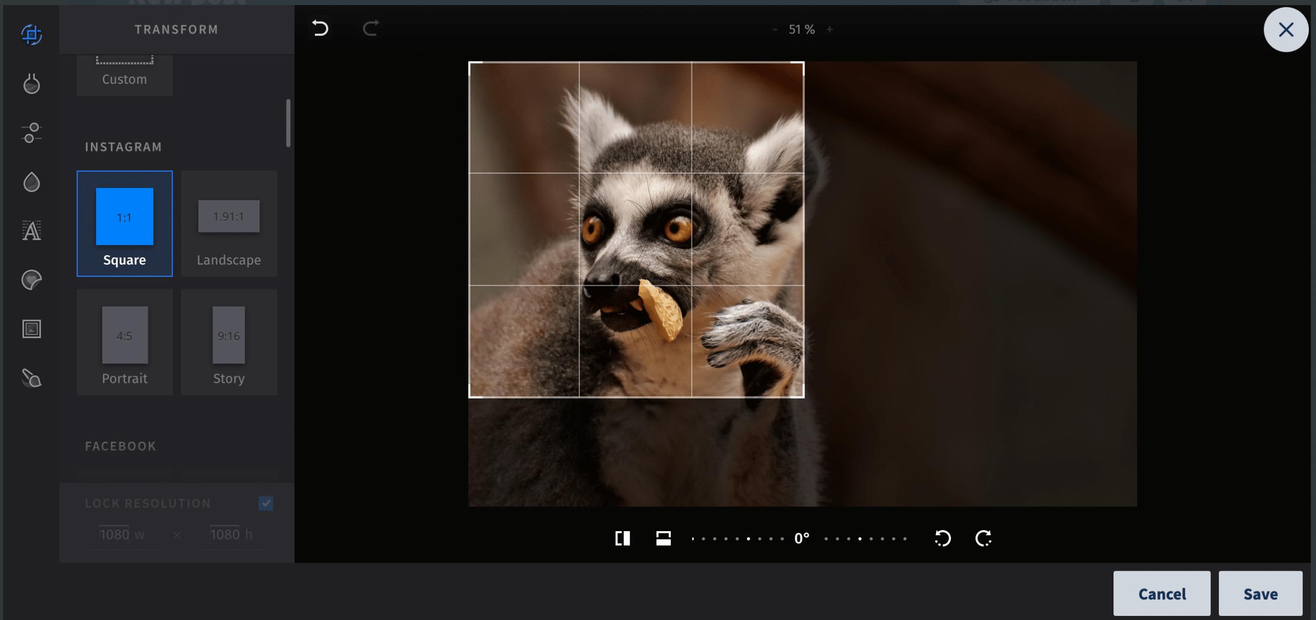 up close shot of a lemur